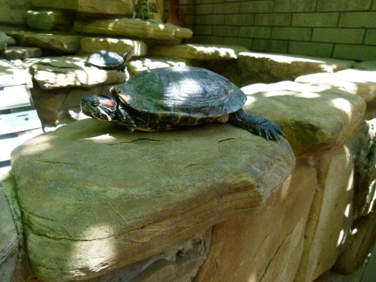 Гостевой дом Райский уголок Сочи Адлер черепаха